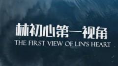 林初心第一视角:精灵王子,终将为王